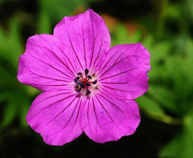 Zanimljive informacije o lila (ljubičastoj) koje sigurno niste znali